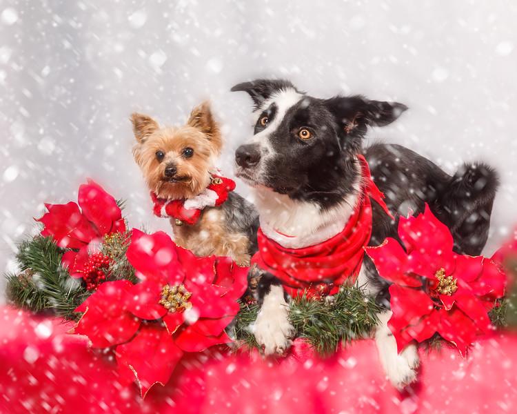 Bella and Dori Christmas