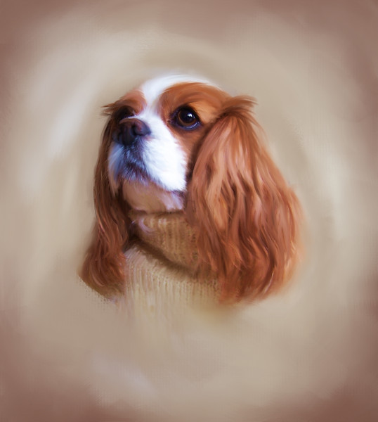 """Memorial Oil Painting of cherished Cavalier """"Sunday"""".   Painting by Lucky Dog Pet Photography from original photograph (c) DayDogDesigns.   <a href=""""http://www.etsy.com/shop/daydogdesigns"""">http://www.etsy.com/shop/daydogdesigns</a>)"""