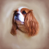 "Memorial Oil Painting of cherished Cavalier ""Sunday"".   Painting by Lucky Dog Pet Photography from original photograph (c) DayDogDesigns.   <a href=""http://www.etsy.com/shop/daydogdesigns"">http://www.etsy.com/shop/daydogdesigns</a>)"