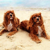 Lucky and Sparky.  Photo and painting both copyright Lucky Dog Pet Photography.