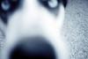 Clea Closeup