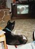 Clea watching TV