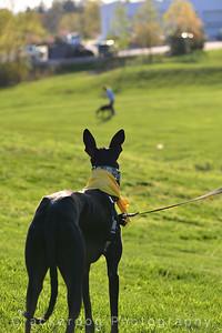 Izaskun watches a grey at play
