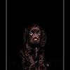 Puppy-2a