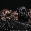 Puppies-3-2