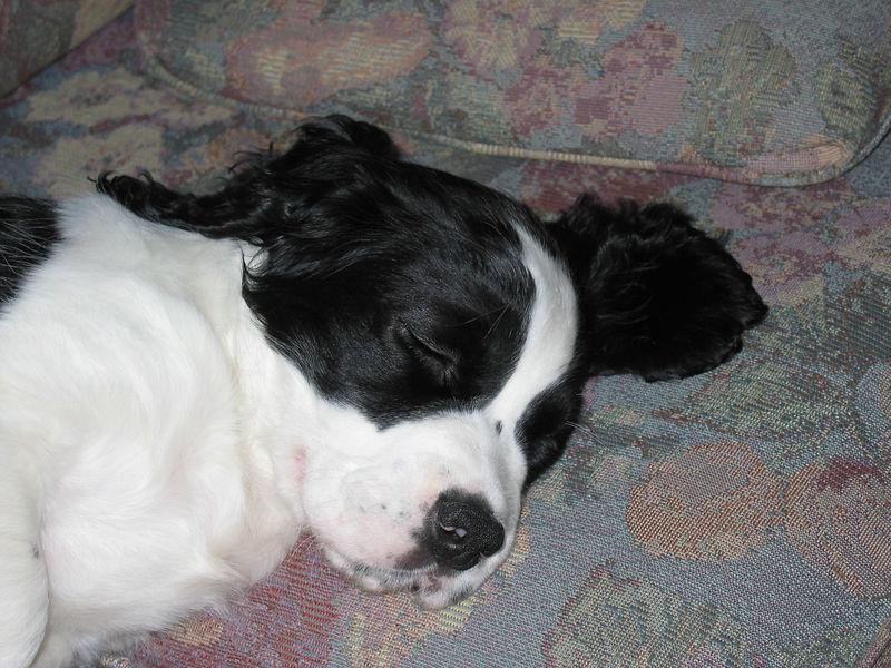 2004_4_29_Coda_Sleeping_005