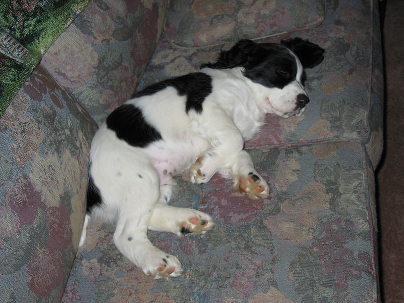 2004_4_29_Coda_Sleeping_003