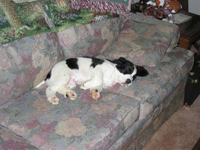 2004_4_29_Coda_Sleeping_002