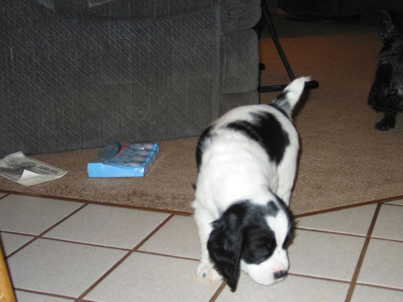 2004_4_8_Coda_Puppy_034