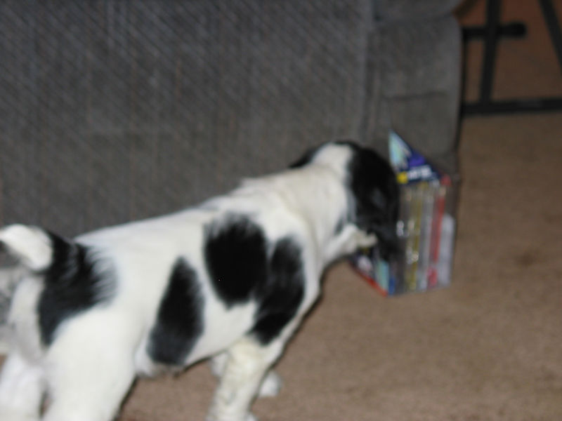 2004_4_8_Coda_Puppy_025