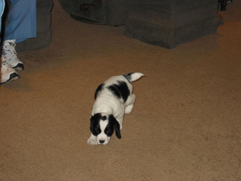 2004_4_8_Coda_Puppy_012