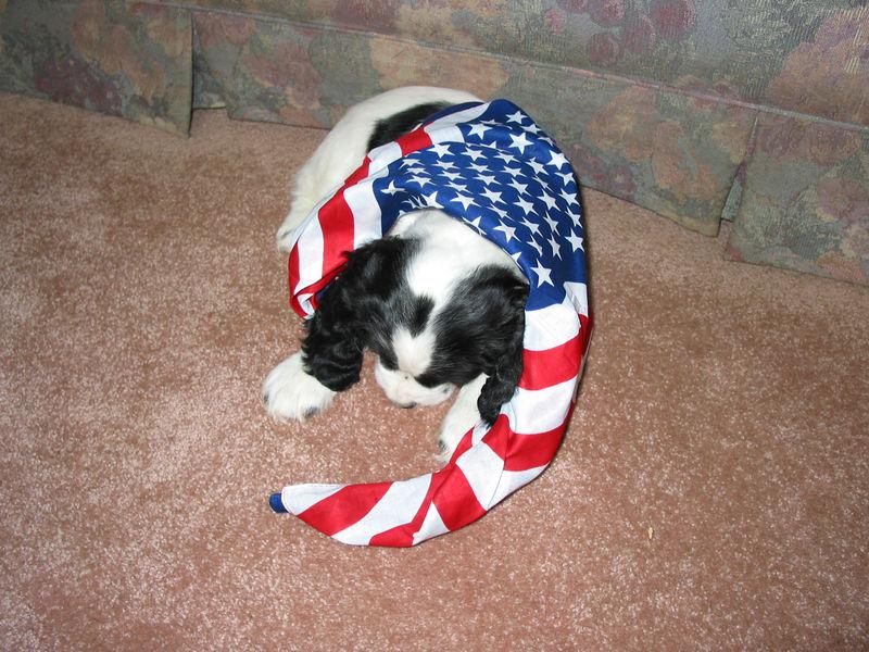 2004_4_8_Coda_Puppy_045