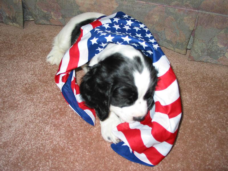 2004_4_8_Coda_Puppy_046
