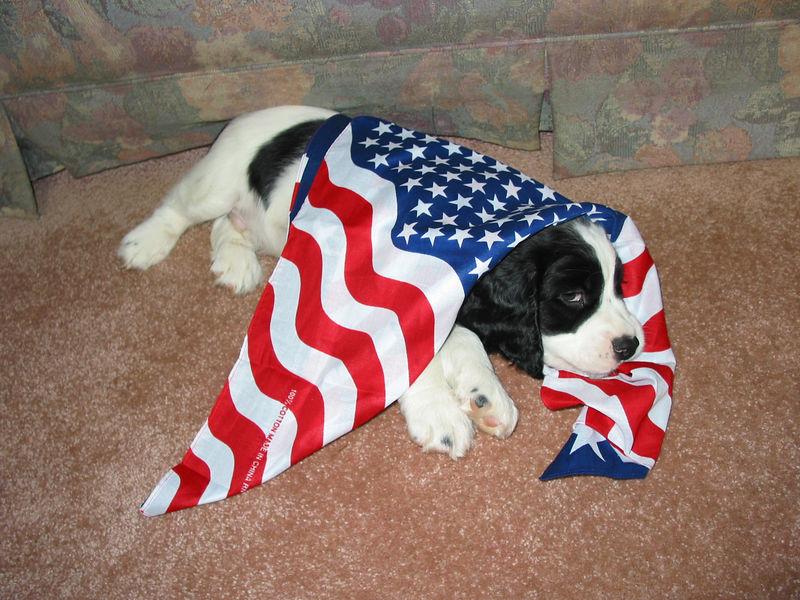 2004_4_8_Coda_Puppy_047
