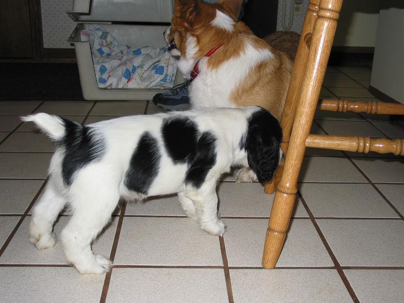 2004_4_8_Coda_Puppy_030