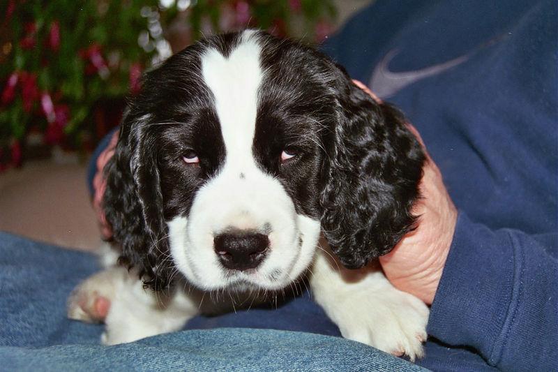 2004_4_8_Coda_Puppy_001