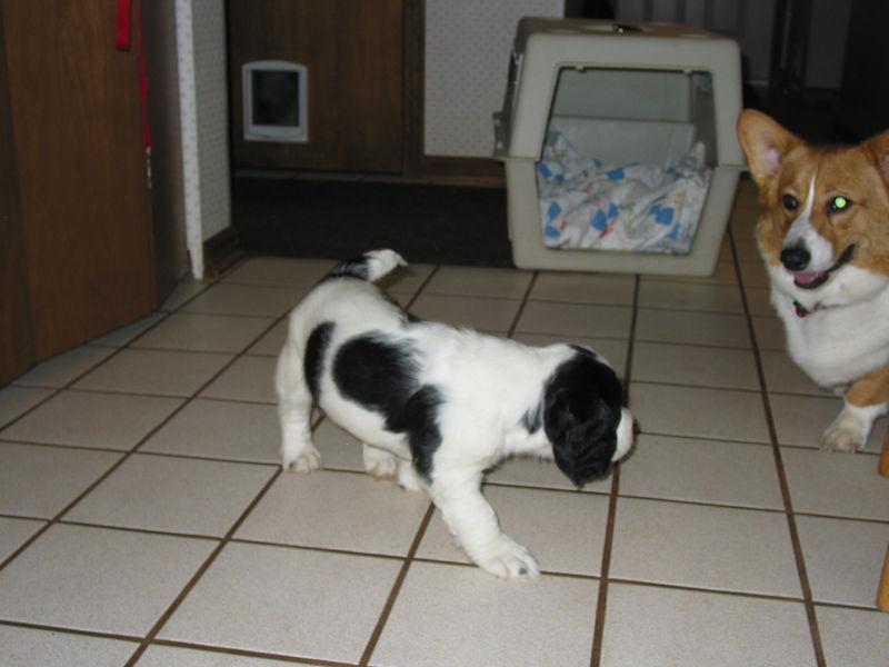 2004_4_8_Coda_Puppy_029
