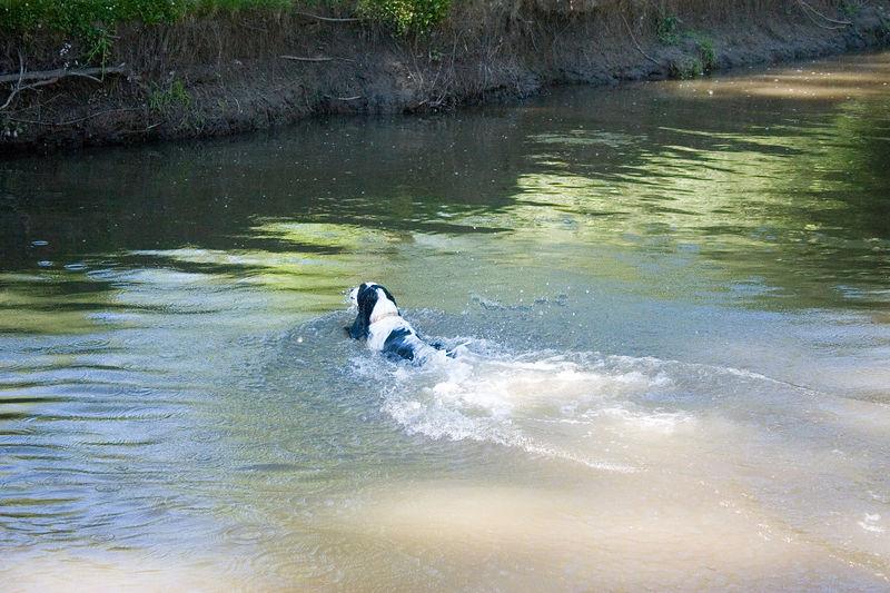 2005_6_21_Swimming_048