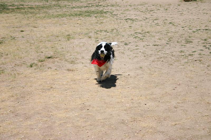 2008-6-21 Hound Hill Park-15