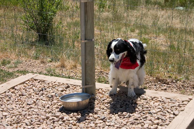 2008-6-21 Hound Hill Park-12