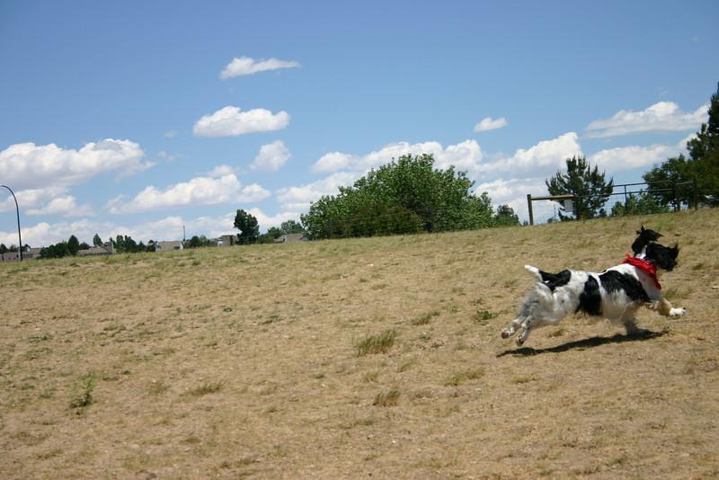 2008-6-21 Hound Hill Park-16