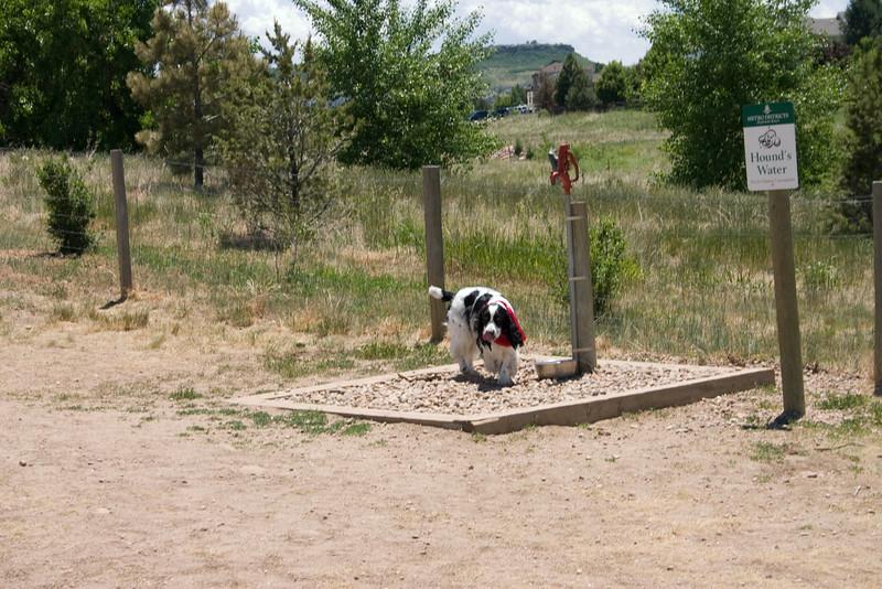 2008-6-21 Hound Hill Park-2