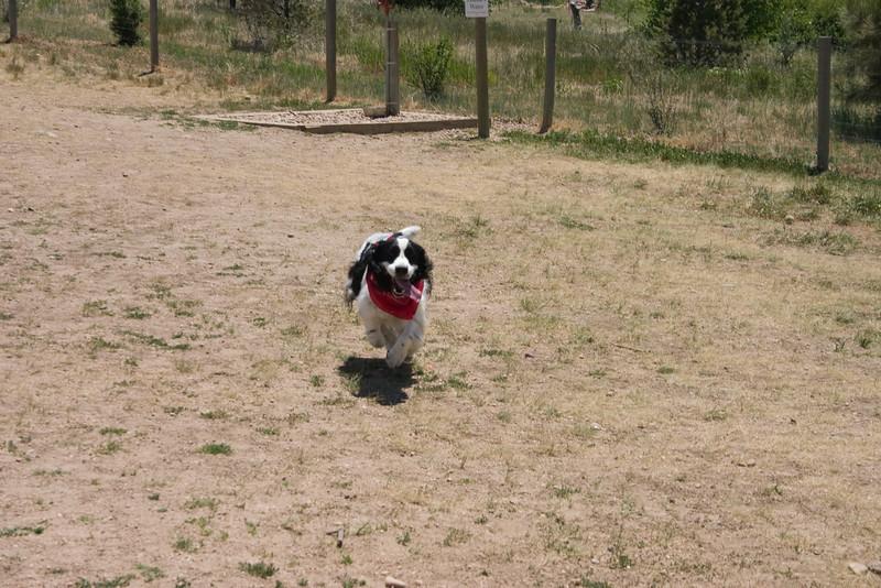 2008-6-21 Hound Hill Park-1