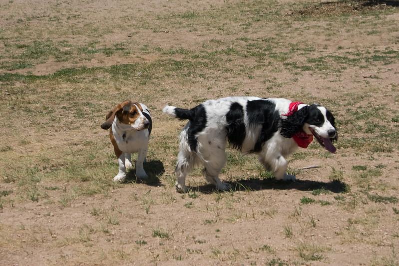 2008-6-21 Hound Hill Park-4