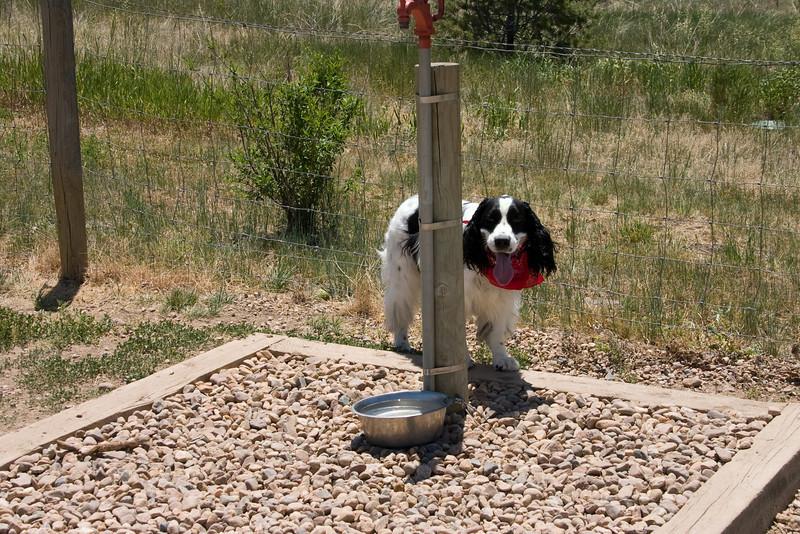 2008-6-21 Hound Hill Park-11