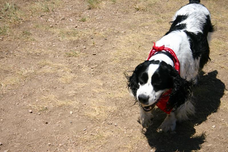 2008-6-21 Hound Hill Park-17