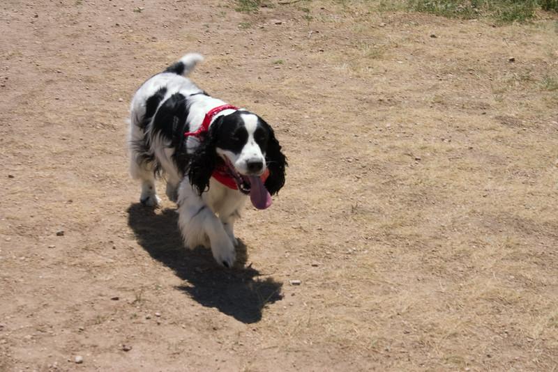 2008-6-21 Hound Hill Park-3