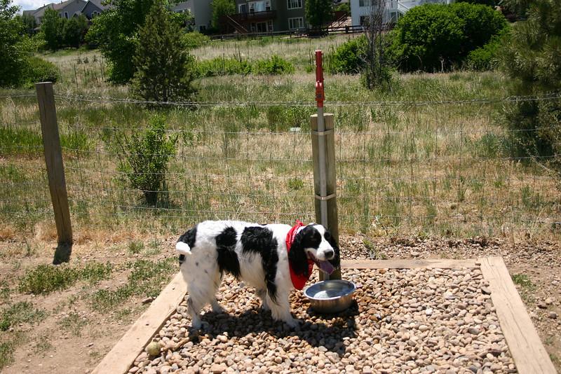 2008-6-21 Hound Hill Park-19