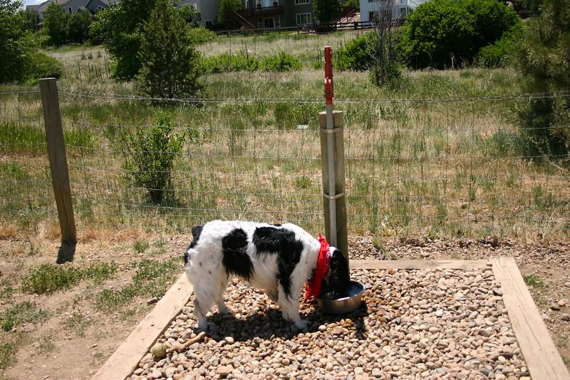 2008-6-21 Hound Hill Park-20