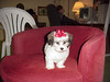Puppy Cody<br /> St. Louis<br /> March 2000