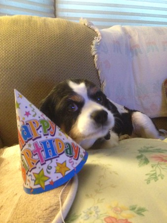 Cooper's 12th Birthday