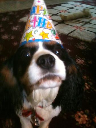 Cooper's 8th Birthday