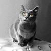 Cat4718 copy