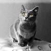 Cat4718 H2o5x7