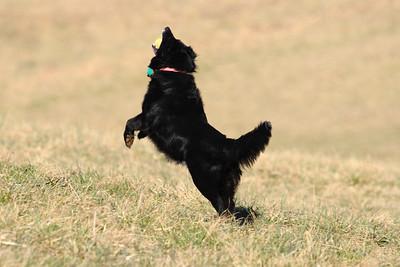 Coyner Springs Dog Park 02-26-2012