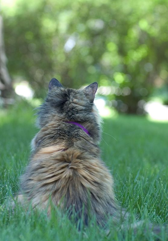 Madeline keeping watch over 'her' yard.