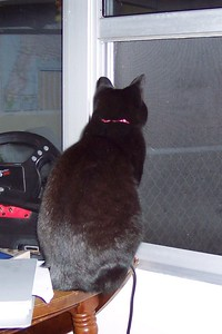 Cricket watches the turtle doves