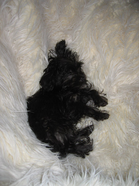 super crashed out on the poof @ midnight