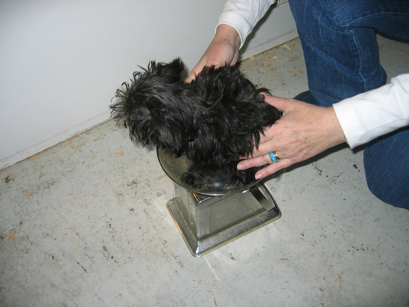 getting weighed -- she's 2.6 LBS. teeny weeny!