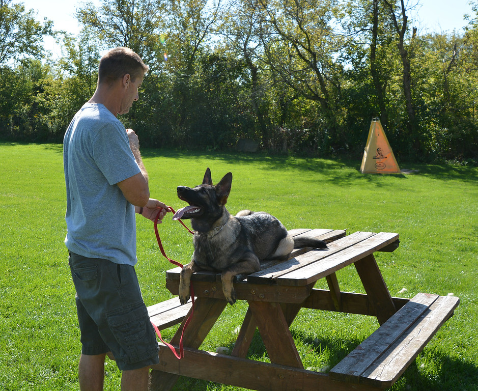 """""""Phoebe"""", back to her birthplace for some obedience training.<br /> October 2015"""