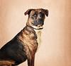 D.C. Animal Shelter 01-09-13 :
