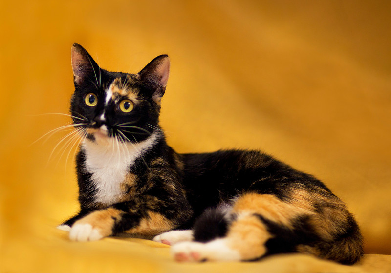 DC Humane Society -West Atlanta Veterinary Clinic 7-19-12