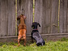 I'd like to play with those dogs !!  Me TOO !!