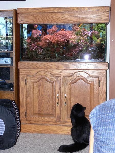 Dart watching the fish