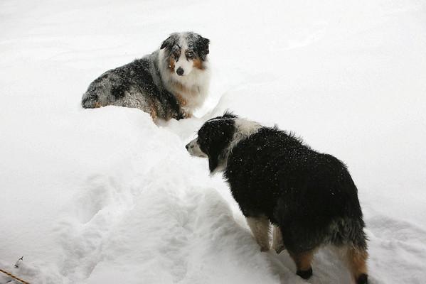 Dec 2009 Blizzard
