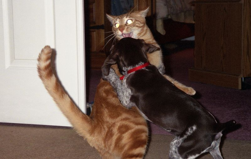 I'm bigger than you!
